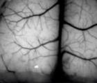 透明的3D打印头骨为大脑提供了一个窗口