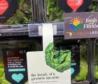 GreenWise在莱克兰集装箱农场内种植包装新鲜的水培生菜